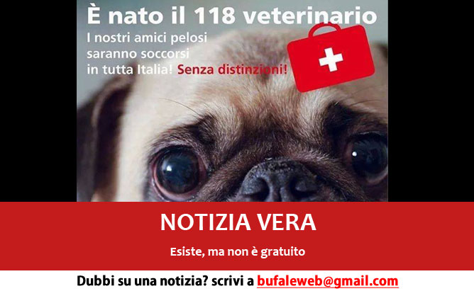 118-cani-veterinario